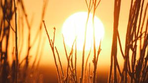2017 año más calido registrado